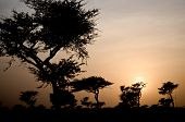 sunset in the Senegalese savannah