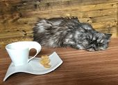 Lazy Sleepy Cat On A Table. Cup Of Coffee And Cat In The Background. Artisctic Photo Of Long Hair Sl poster