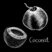 Coco Nuts By White Chalk On Black Background. Coconut Hand-drawn Illustration. Coco Whole And Half O poster