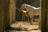 foto of hacienda  - horses in the hacienda de san miguel regla mexico  - JPG