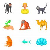 Vital World Icons Set. Cartoon Set Of 9 Vital World Vector Icons For Web Isolated On White Backgroun poster