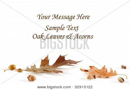 Oak Leaf And Acorn Card