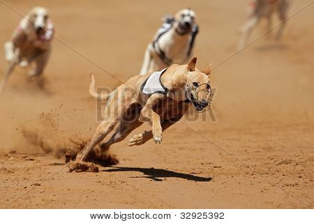 Greyhound Sprint
