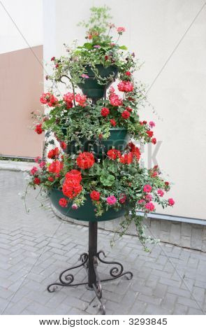 Flowers In Cache-Pot