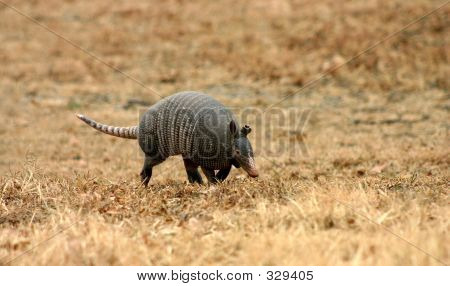Walking Armadillo