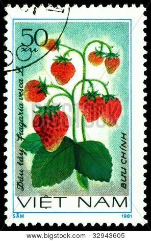 Vintage  Postage Stamp. Strawberry. Fragaria Vesca L.