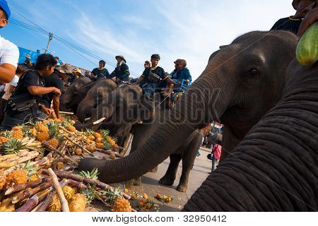 Closeup Elephant Breakfast Feeding