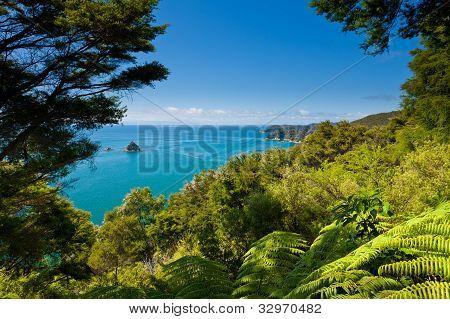Bosque subtropical de Abel Tasman NP, Nueva Zelanda