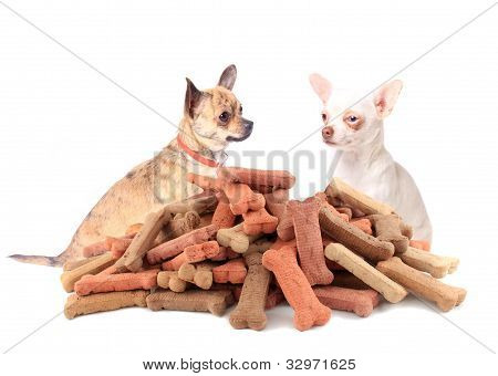 Chihuahuas Looking At Dog Food