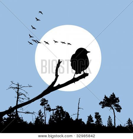 bird on branch silhouette on solar background, vector illustration