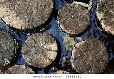 Tree Trunk In The Water
