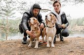 Young casual couple sitting on squats cuddling two purebred beagle puppies while chilling in rural e poster