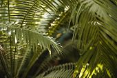 Creative Tropical Green Leaves Layout. Nature Summer Concept. Tropical Palm Foliage poster