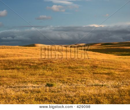 Prairie Meadow_corrected