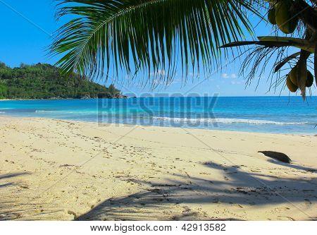 Exotic Sand Heaven