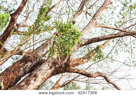 Lush Big Green Tree With Bending And Curving Branches
