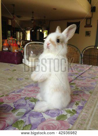 Rabbit03