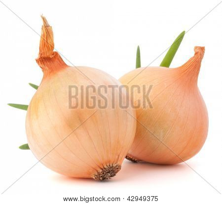 Onion vegetable still life on white background cutout