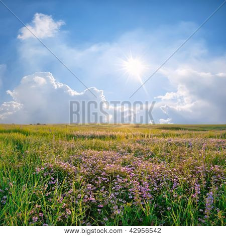 Spring Landscape With Flower