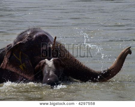 Baño de elefante