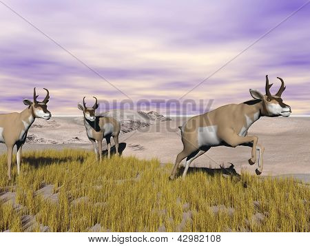 Pronghorn Antelopes In The Wild - 3D Render