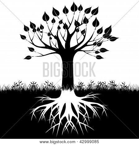Drvo-ptice 001