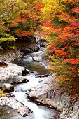 pic of fukushima  - Autumn colours of Nakatsugawa valley in Fukushima Japan - JPG