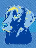 picture of chocolate lab  - Labrador Dog in a  Blue Pop Art Style - JPG