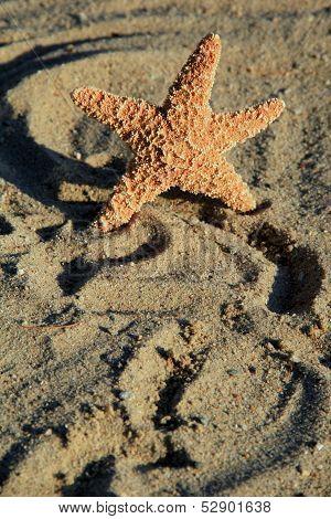 starfish on sandy beach