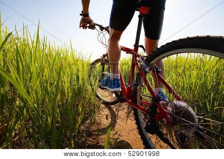 Young rider cycling through a green lush meadow in sunny day