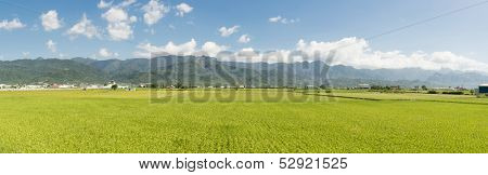 Panoramic rural scenery of Hualien with paddy farm and mountain faraway, Taiwan, Asia.
