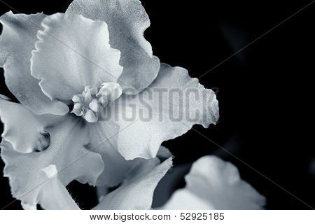 Silvery Flower Closeup On A Black Background