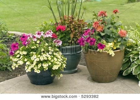 Flower Pots With Blooming Flowers