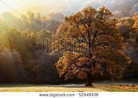 Sunlight and autumn tree in a park