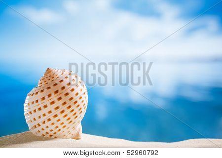 niceseashell  with ocean , beach and seascape, shallow dof