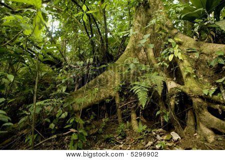 Rain Forest Detail