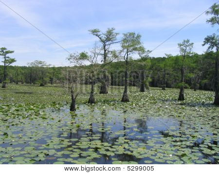 Caddo Lake 7