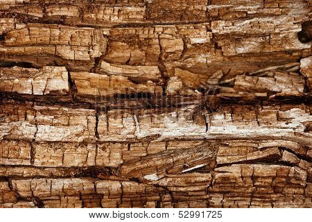 Completely Rotted Wood