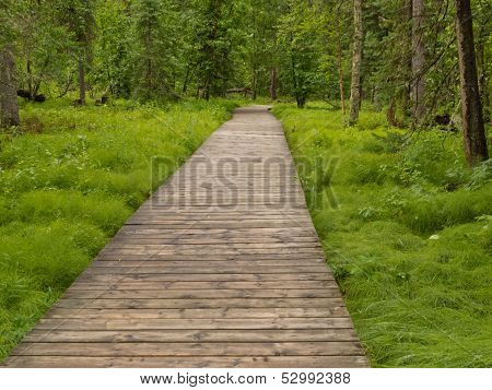 Boreal Forest Taiga Boardwalk Northern Bc Canada