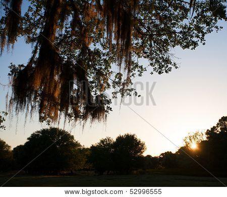 Florida Nightfall