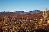 foto of denali national park  - Denali  - JPG