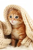 stock photo of orange kitten  - Cute little red kitten in scarf isolated on white - JPG