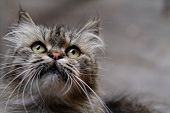 stock photo of animal nose  - a cat close  - JPG