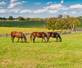 picture of wooden horse  - Horses at horse farm - JPG
