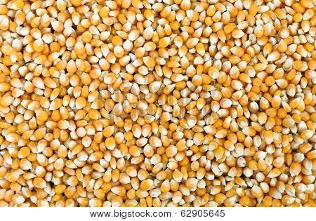 Close up of corn grains.