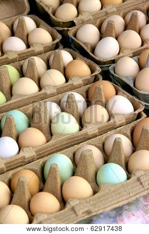 Multi Coloured Eggs