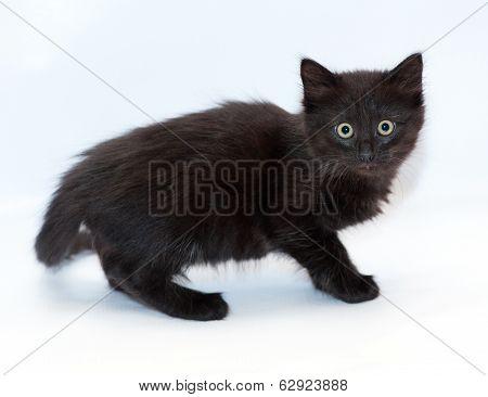 Small Black Longhair Kitten On Gray Background