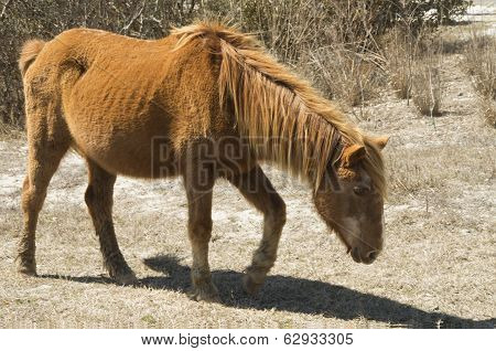 Assataque Pony