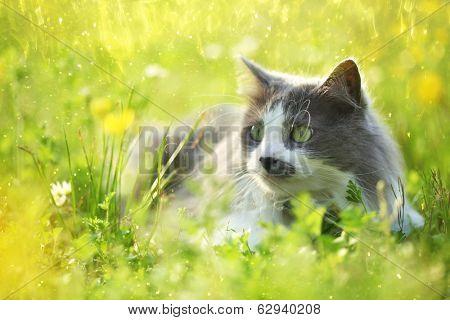 Grey cat in garden