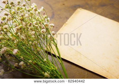 bouquet of baby's breath (or Gypsophila), with old blank card, memo or  paper .Focus is  set on foreground (babys breath)